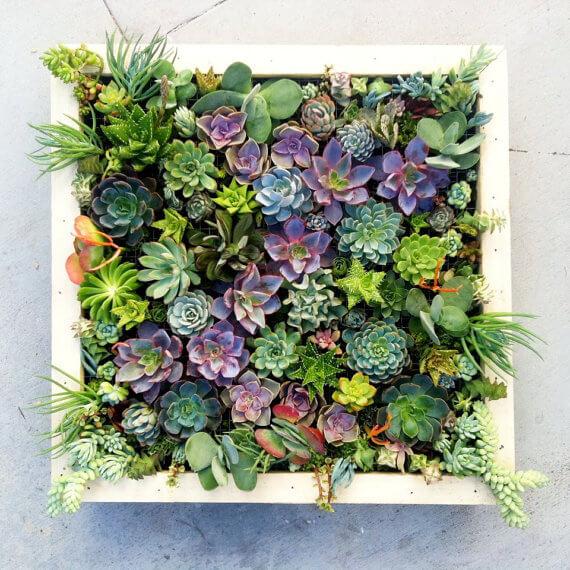 jardim-vertical-suculenta